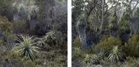 http://vanessagandar.com/files/gimgs/th-50_tasmania-duo-2.jpg